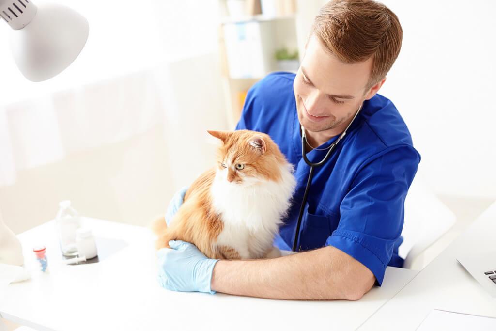 Ветеринарная Клиника Ав Айболит